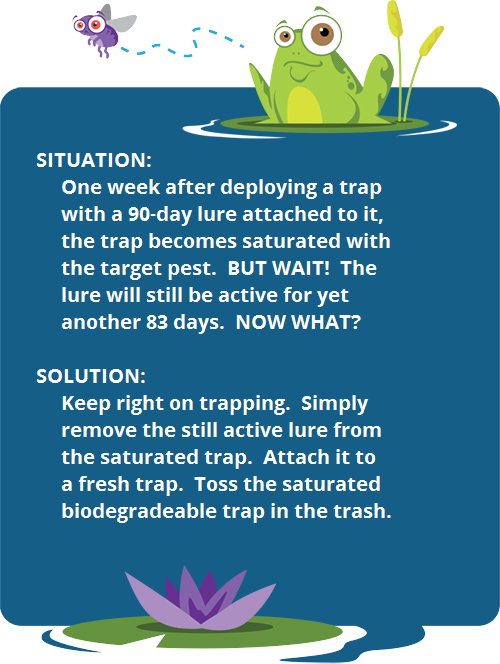 Move long life lures to fresh traps